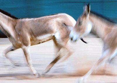 How Many Hands: Racing Donkeys
